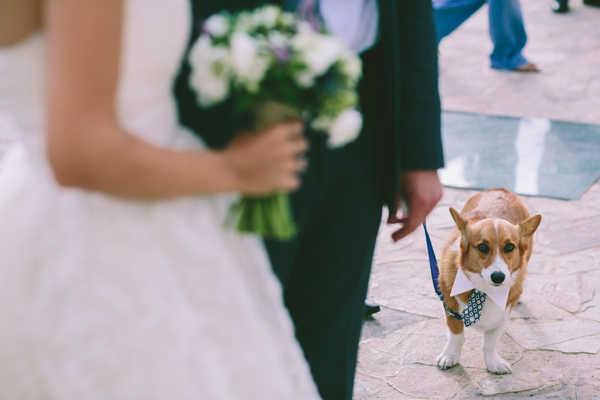 wedding-photography-dog