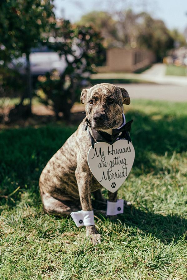pets-wedding-dog