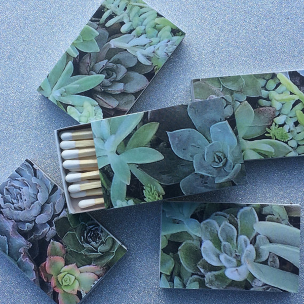 Succulents Matchbox
