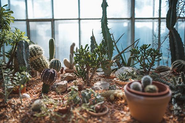 inspiration-photoshoot-beautiful-greenhouse-4