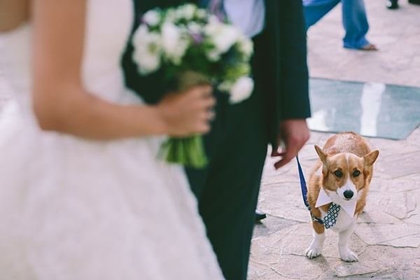 pets-weddings-how-include-them-3.